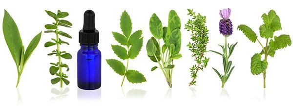medicinal-and-culinary-herbs