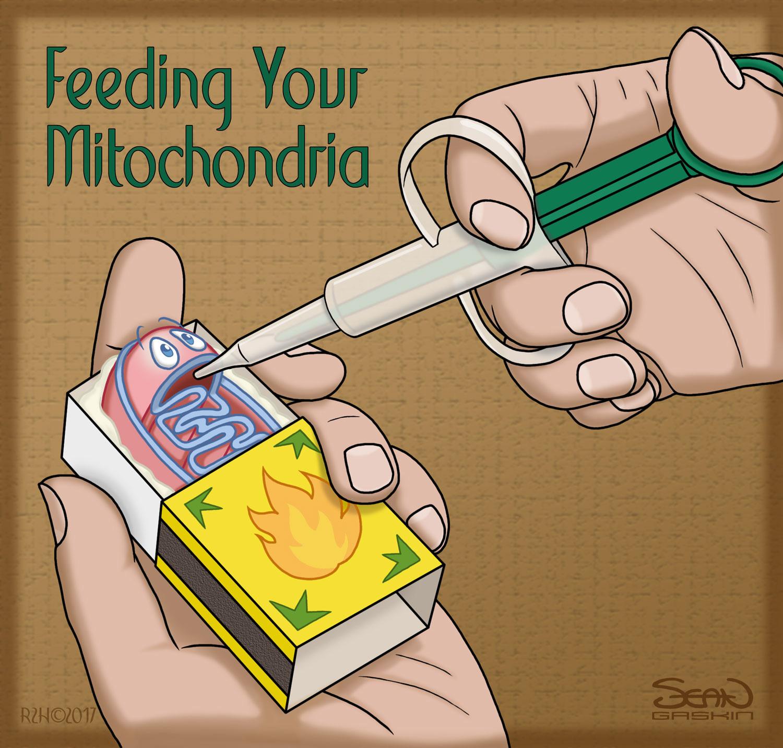 Feeding Your Mitochondria Return2health